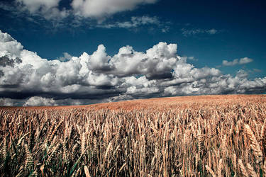 Neverending fields by apfe