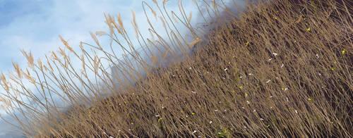 Tilted Field by Gert-Frisch