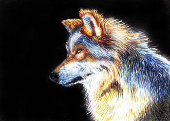 Wolf (21-12-16) by xstorradax