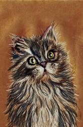 Kitty (19-09-16) by xstorradax