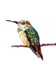 Hummingbird (25-10-14) by xstorradax