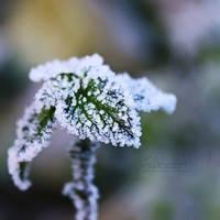 Freezing Times by IndigoSummerr