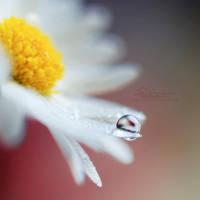 Daisy Drop by IndigoSummerr