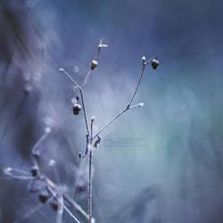1/52 - I'm feelin' blue by IndigoSummerr