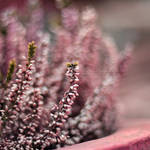 pink. by IndigoSummerr