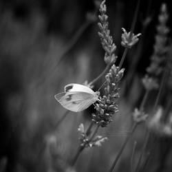 Tiny Beauty by IndigoSummerr