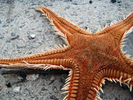 Estrella de Mar by raspete