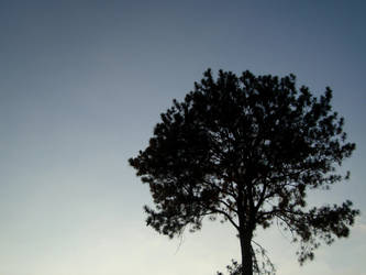 Shadow Tree by evilblondie
