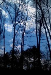 Alone in the Woods by evilblondie