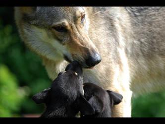 Alaskan husky puppies with Ori by Pawkeye
