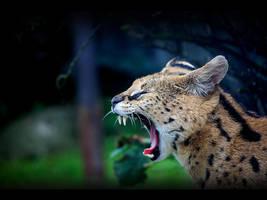 Yawling serval by Pawkeye