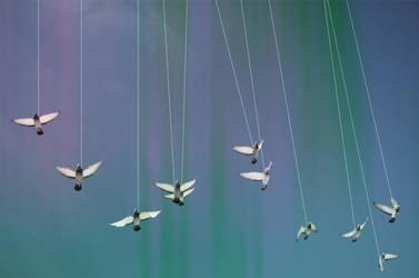 Birds by Novocain-Stain