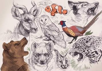 Animalia III by BooYeh