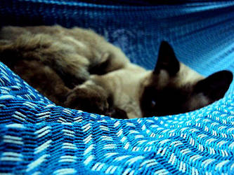 Cat on a Hamac by zda369