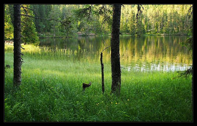 Summer by Fishermang