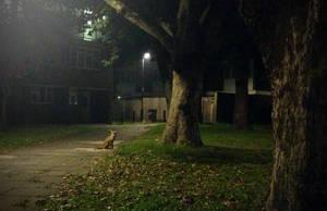 Mr Brave Little Fox by TheBigDaveC