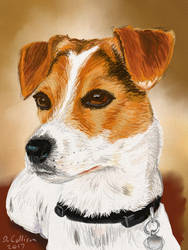 Bo, Geri's Jack Russell by TheBigDaveC