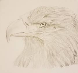 Birdsketch by BirdofHearts