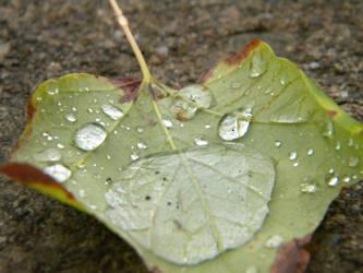 Make like a wet tree... by photoguy22