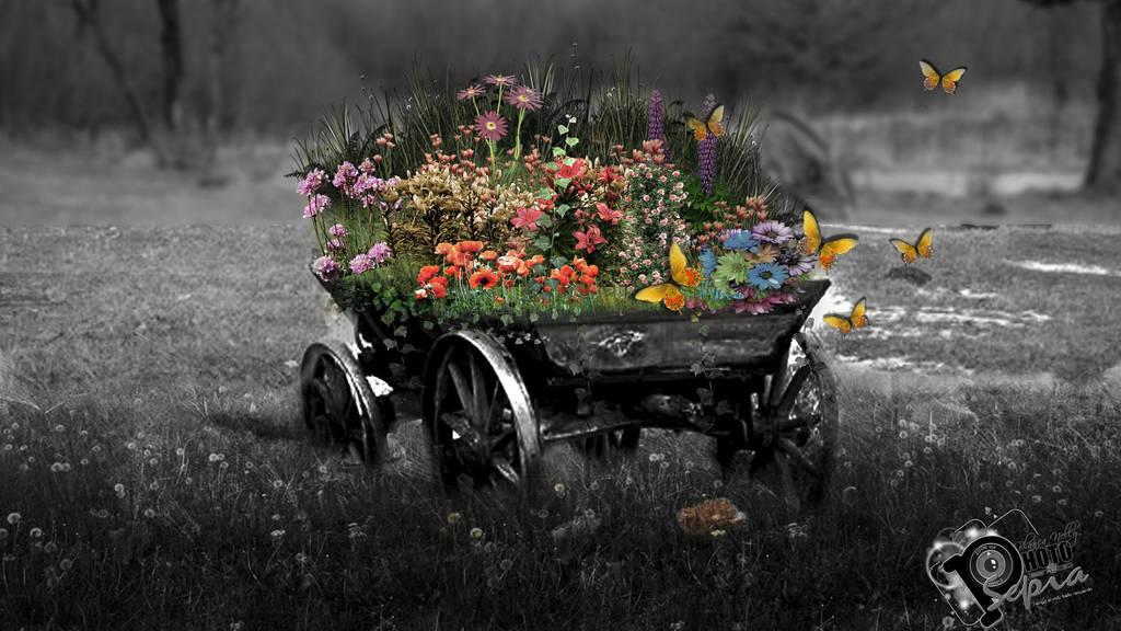 Carreta con flores by NUBES112