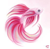 Party Betta by Majoh
