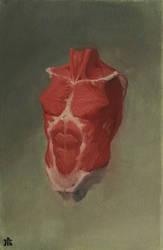 Torso Anatomy by Exidelo