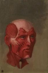 Head Anatomy by Exidelo