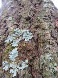 Lichen by LoveDystopian