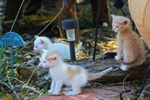Watch Kitties by AgatsumaSoubisan