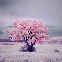 Dream A Little Dream by IngoSchobert