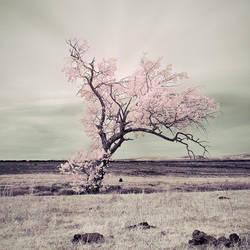 Enjoy The Silence by IngoSchobert
