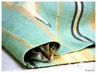 Popiah Kitten by designslave