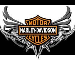 Harley .. by Miyudo
