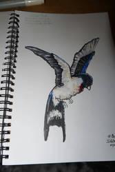 Inktober #01 Swift by Sefira-ry