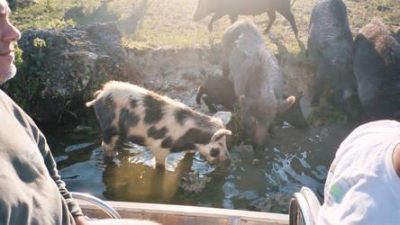 Hogs - Billie Swamp Safari by Riastrad729