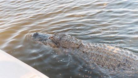 Gator 1 - Billie Swamp Safari by Riastrad729
