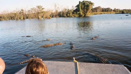 Gators 4 - Billie Swamp Safari by Riastrad729