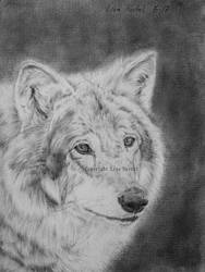 Wolf portrait III by BeckyKidus