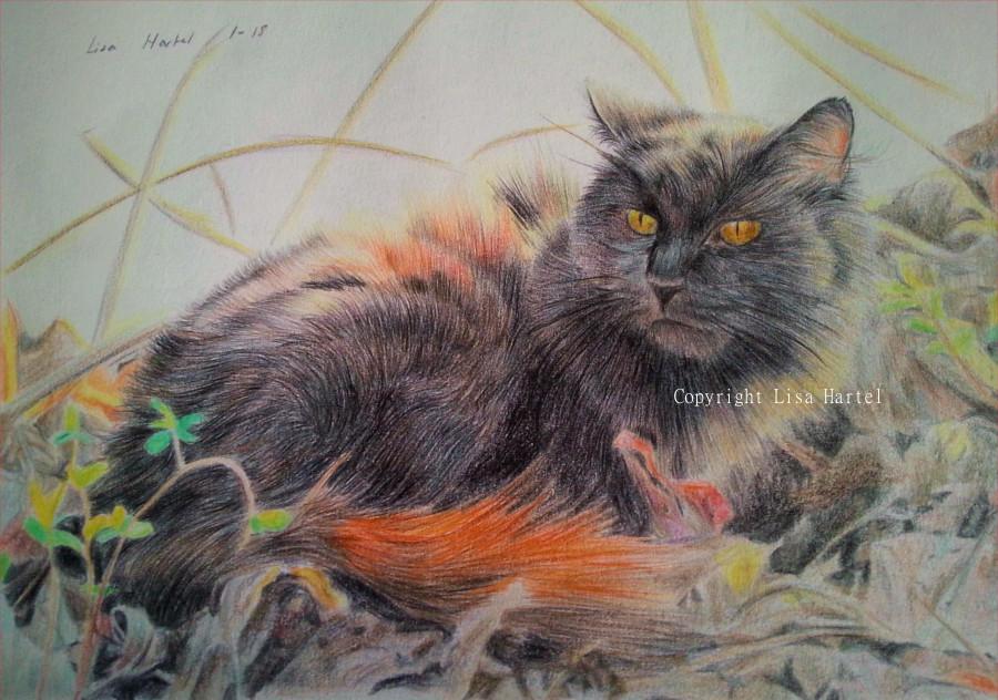 Black cat - Twinkles by BeckyKidus