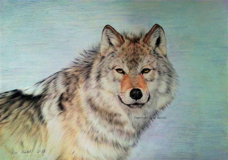 Wolf portrait VII by BeckyKidus