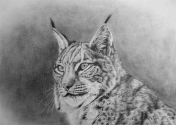 Lynx portrait II by BeckyKidus