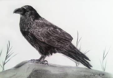 Raven by BeckyKidus