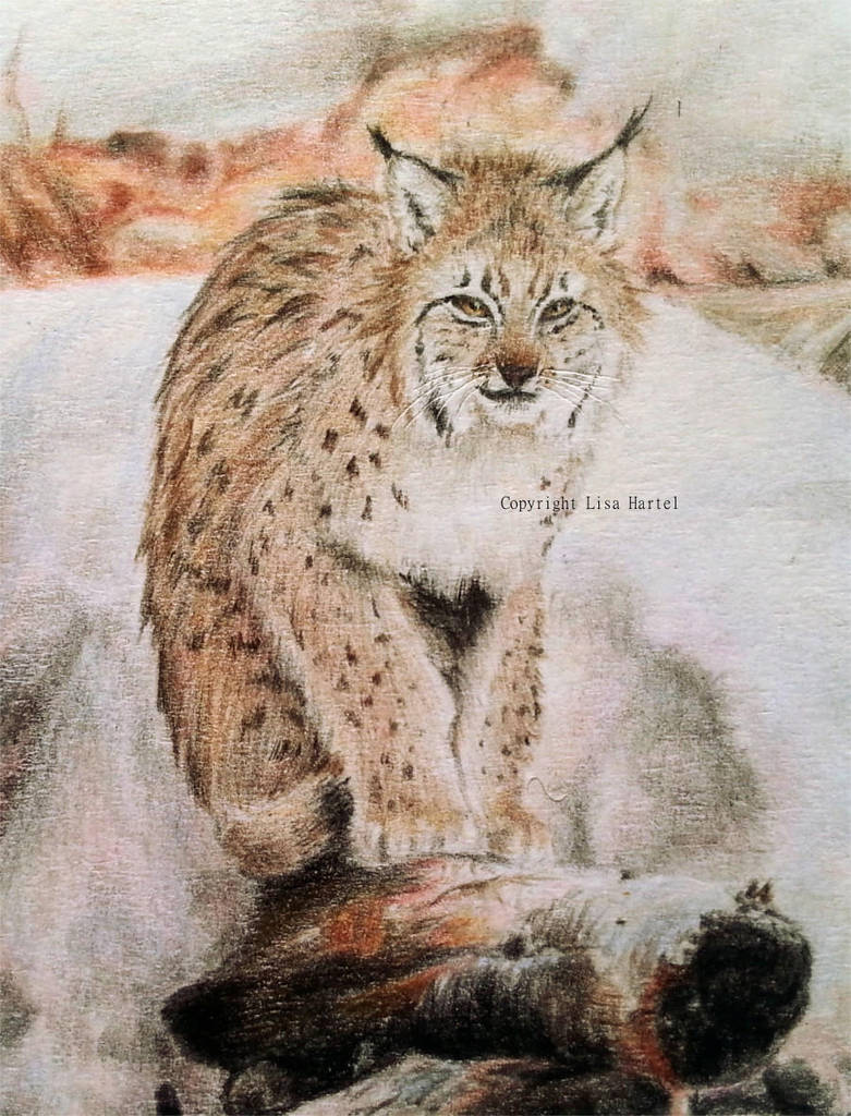 The right type of lynx by BeckyKidus