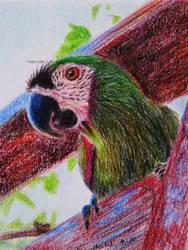 Parrot by BeckyKidus