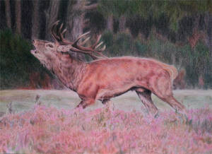 Red deer stag - The Heather King by BeckyKidus