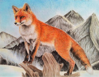 White Landscape - Red Fox by BeckyKidus