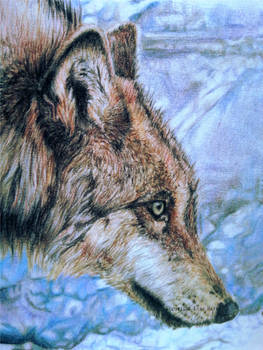 Grey Wolf - Look Before You Leap DETAIL by BeckyKidus