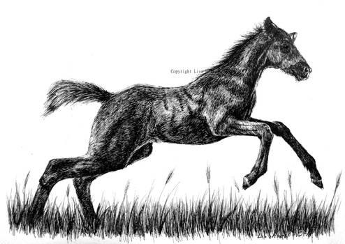 Unicorn foal by BeckyKidus