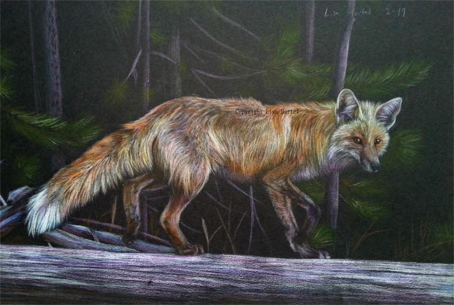 Red fox - Night walk by BeckyKidus