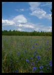 Field of Blue by evaPM